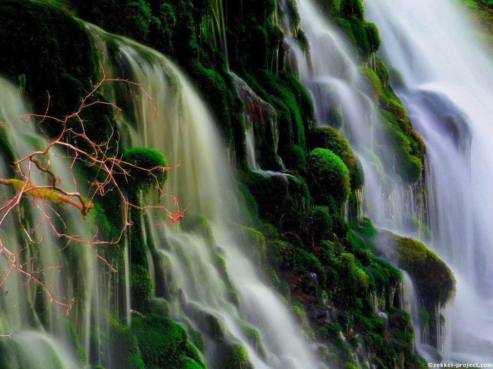 滝 伏流 水 元 こんな自然があったんだ!にかほ市の魅力を再発見!~元滝伏流水自然観察と苔玉づくり体験~第2回